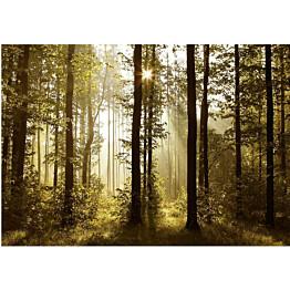 Sisustustarra Artgeist Forest: Morning Sunlight  eri kokoja