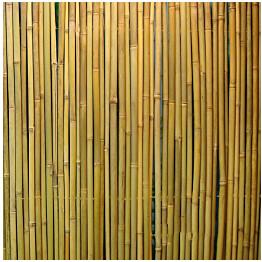 Bambuaita Home4you In Garden 200x300 cm