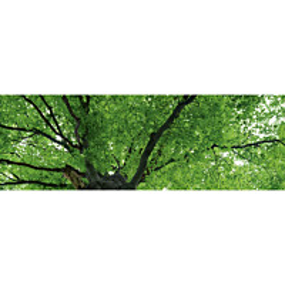 Välitilatarra Dimex Treetop 180x60cm