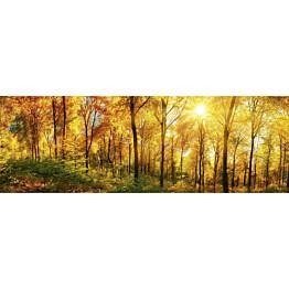 Välitilatarra Dimex Sunny Forest 180x60cm