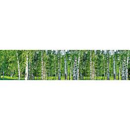 Välitilatarra Dimex Birch Grow 260x60cm
