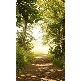 Kuvatapetti Dimex  Forest Path 150 x 250 cm