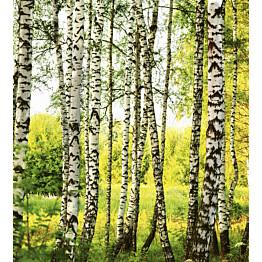 Kuvatapetti Dimex  Birch Forest 225 x 250 cm