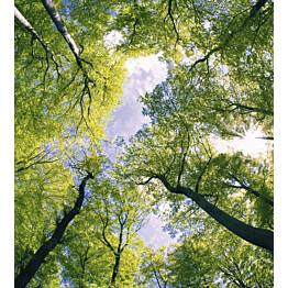 Kuvatapetti Dimex  Trees  225 x 250 cm