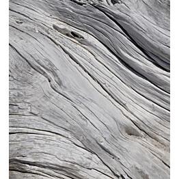Kuvatapetti Dimex  Tree Teture 225 x 250 cm