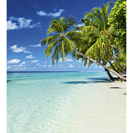Kuvatapetti Dimex  Paradise Beach 225 x 250 cm