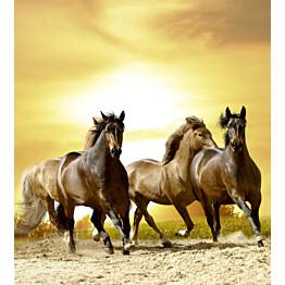 Kuvatapetti Dimex  Horses In Sunset  225 x 250 cm