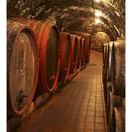 Kuvatapetti Dimex  Wine Barrels 225 x 250 cm