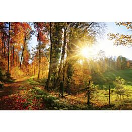 Kuvatapetti Dimex  Forest Walk 375 x 250 cm