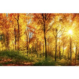 Kuvatapetti Dimex  Sunny Forest 375 x 250 cm