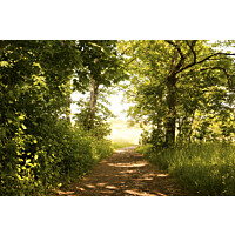 Kuvatapetti Dimex  Forest Path 375 x 250 cm