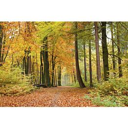 Kuvatapetti Dimex  Autumn Forest 375 x 250 cm