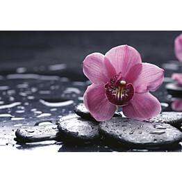 Kuvatapetti Dimex  Orchid  375 x 250 cm
