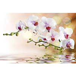 Kuvatapetti Dimex  White Orchid 375 x 250 cm