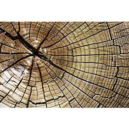Kuvatapetti Dimex  Wood  375 x 250 cm