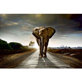 Kuvatapetti Dimex  Walking Elephant 375 x 250 cm