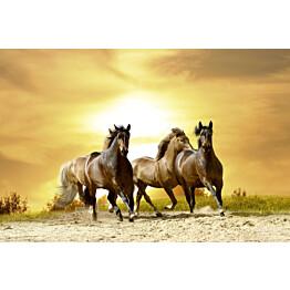 Kuvatapetti Dimex  Horses In Sunset  375 x 250 cm