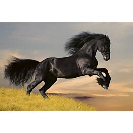 Kuvatapetti Dimex  Horse  375 x 250 cm