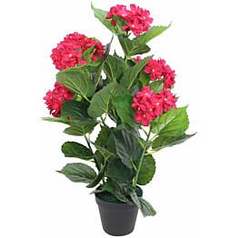 Tekokukka ruukulla hortensia 60 cm punainen_1