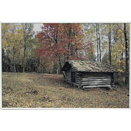 Akustiikkataulu Yeseco Still T 60x40 cm valkoiset puukehykset eri kuvia (myös omalla kuvalla)