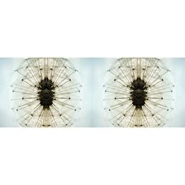 Valokuvatapetti Quattro Dandelion 8-osainen 372x280 cm