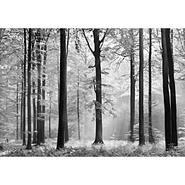 Valokuvatapetti 00115 Avalon 8-osainen 366x254 cm
