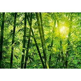 Valokuvatapetti 00123 Bamboo Forest 8-osainen 366x254 cm