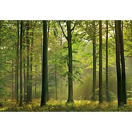 Valokuvatapetti 00216 Autumn Forest 8-osainen 366x254 cm