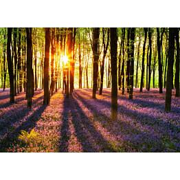 Valokuvatapetti 00952 Woodland at Dawn 8-osainen non-woven 366x254 cm