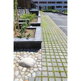 Nurmi-/hulevesikivi Grass 140x140x80 mm harmaa