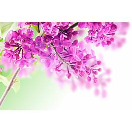 Paneelitapetti PhotoWallXL Lilac 158010 4185x2790 mm