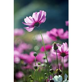 Paneelitapetti PhotoWallXL Purple Beauty 158005 1860x2790 mm