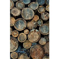 Paneelitapetti PhotowallXL Wood Logs 158206 1860x2790 mm ruskea