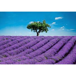 Valokuvatapetti 00144 Provence 8-osainen 366x254 cm