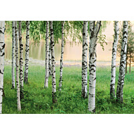 Valokuvatapetti 00290 Nordic Forest 8-osainen 366x254 cm