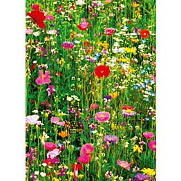 Valokuvatapetti 00375 Flower Field 4-osainen 183x254 cm