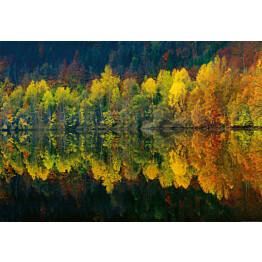 Valokuvatapetti Idealdecor Digital Autumn Forest Lake 4-osaa 5067-4V-1 254x368 cm