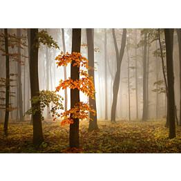 Valokuvatapetti Idealdecor Digital Foggy Autumn Forrest 4-osaa 5153-4V-1 254x368 cm
