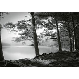 Valokuvatapetti Idealdecor Digital Forest Lake 4-osaa 5134-4V-1 254x368 cm