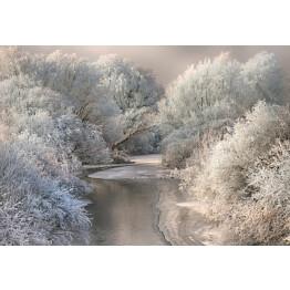Valokuvatapetti Idealdecor Digital Frozen Forrest 4-osaa 5161-4V-1 254x368 cm