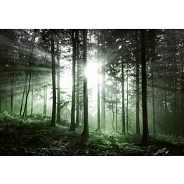 Valokuvatapetti Idealdecor Digital Sun Rays 4-osaa 5181-4V-1 254x368 cm