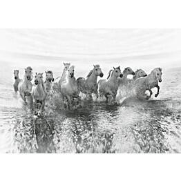 Valokuvatapetti Idealdecor Digital White Horses 4-osaa 5111-4V-1 254x368 cm