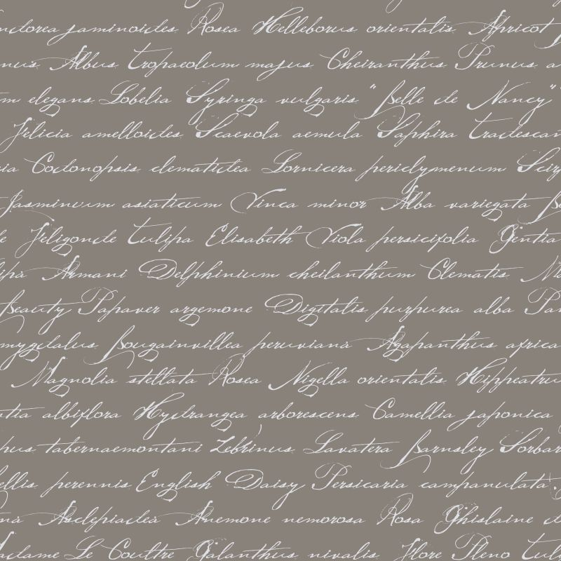 Tapetti Handwriting Latin Flower Names 128035 0,53x10,05 m taupe non-woven