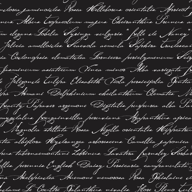 Tapetti Handwriting Latin Flower Names 128036 0,53x10,05 m musta non-woven