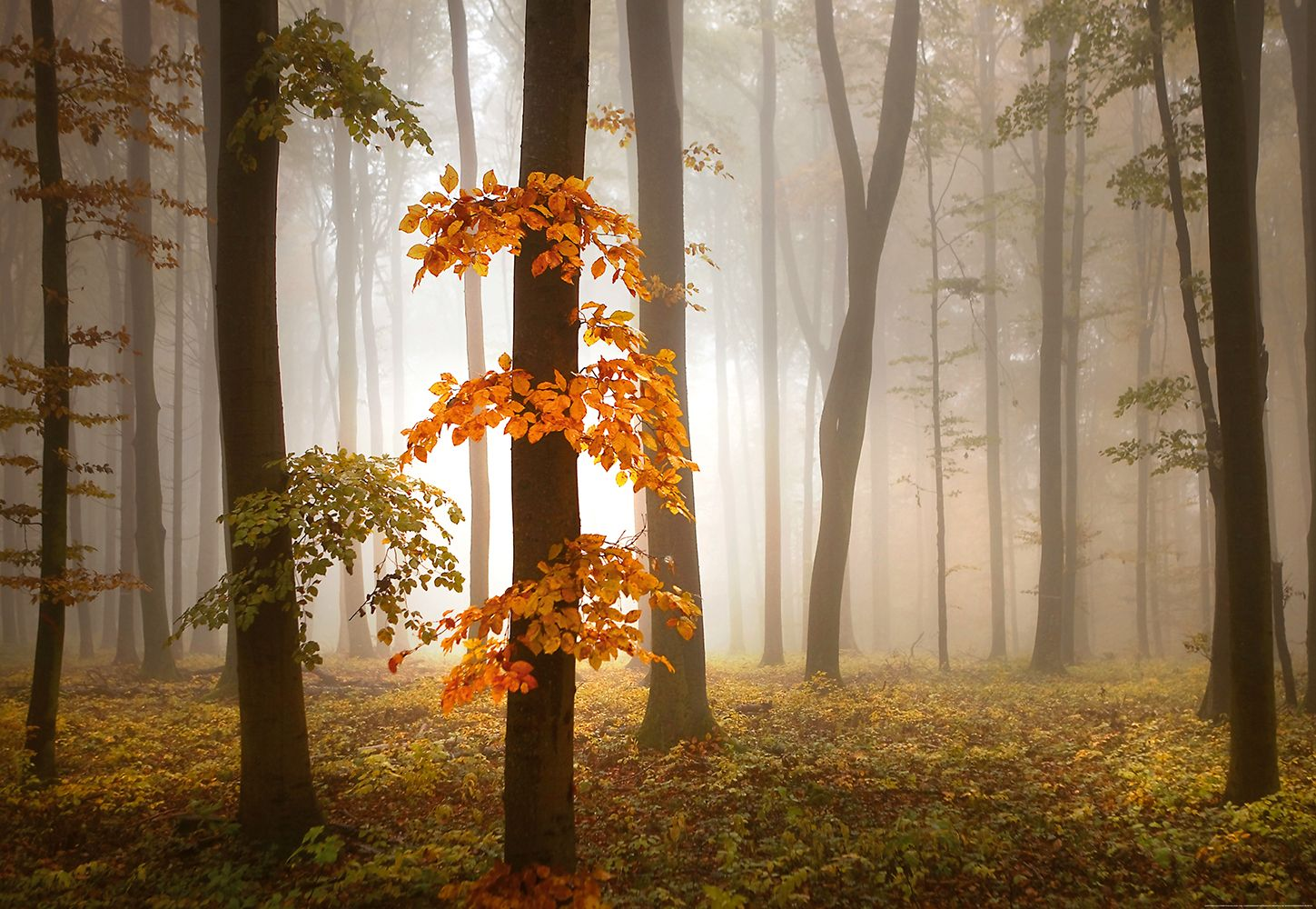 Valokuvatapetti Idealdecor Digital Foggy Autumn Forrest 4-osaa 5153-4V-1 254x368 cm